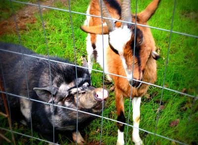 Lillie und Iki, die beiden Verliebten, immer vor Ort!
