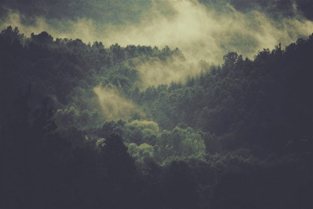 Wald-im-Morgennebel